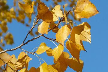 21 жовтня: народний календар і астровісник