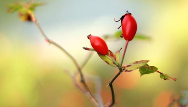 5 октября: народный календарь и астровестник