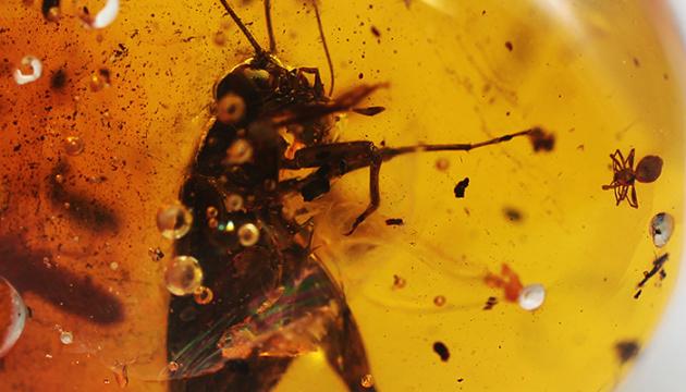 Вченим вдалося виділити фрагменти ДНК комах, «замурованих» у смолі
