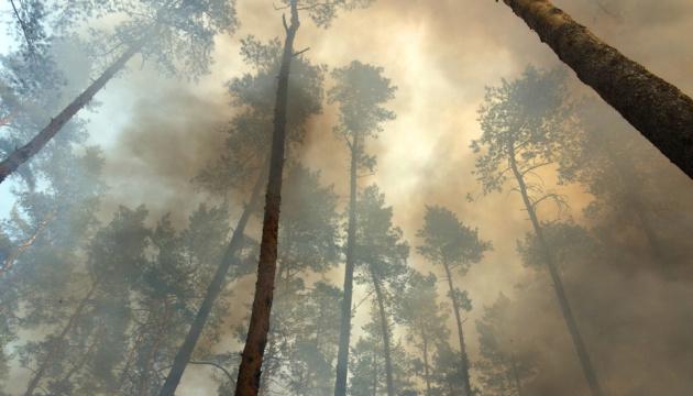 Луганщина проситиме міжнародної допомоги у відновленні лісів