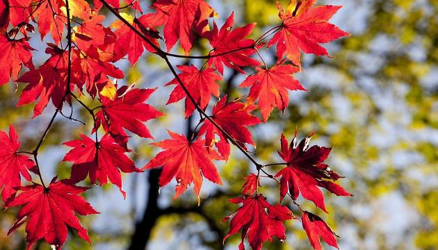 8 жовтня: народний календар і астровісник