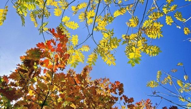 12 октября: народный календарь и астровестник
