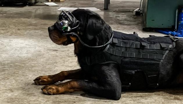 У США розробили окуляри доповненої реальності для собак з рацією