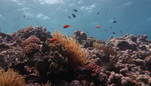 Большой барьерный риф потерял более половины кораллов из-за смены климата - ученые