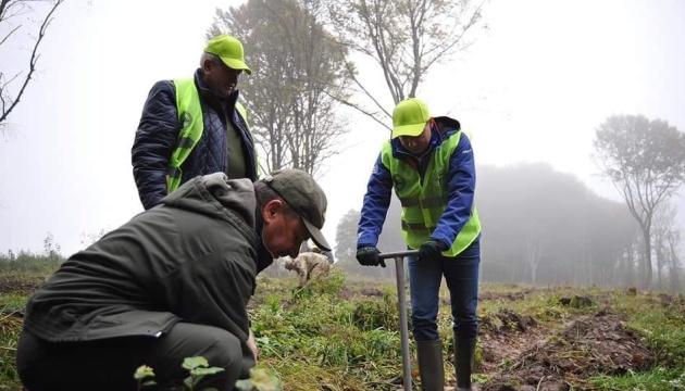 Проєкт «Озеленення України»: на Львівщині за добу висаджують понад 200 тисяч дерев