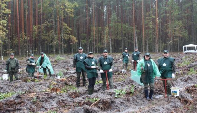 На Житомирщині за добу висадили 300 тисяч дерев