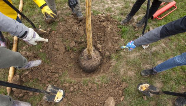Українське посольство в Празі долучилося до висадження дерев на Алеї порозуміння