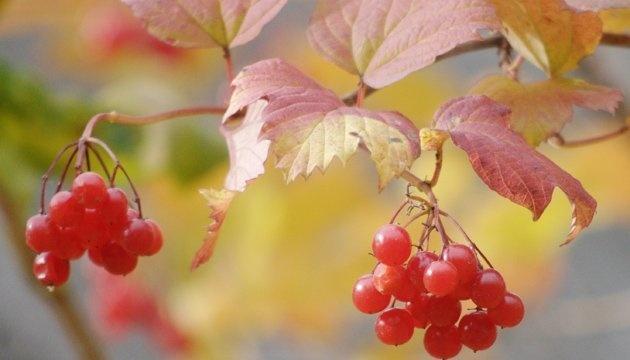 29 октября: народный календарь и астровестник