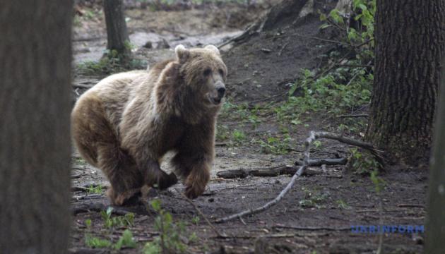 Тарпани, «бембі» й ведмеді: Львівщина назвала сезонні туристичні «магніти»