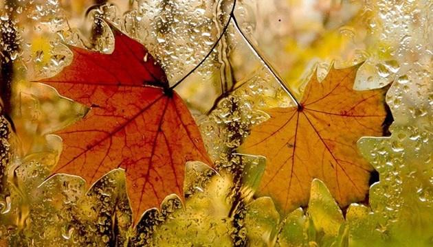 1 ноября: народный календарь и астровисник