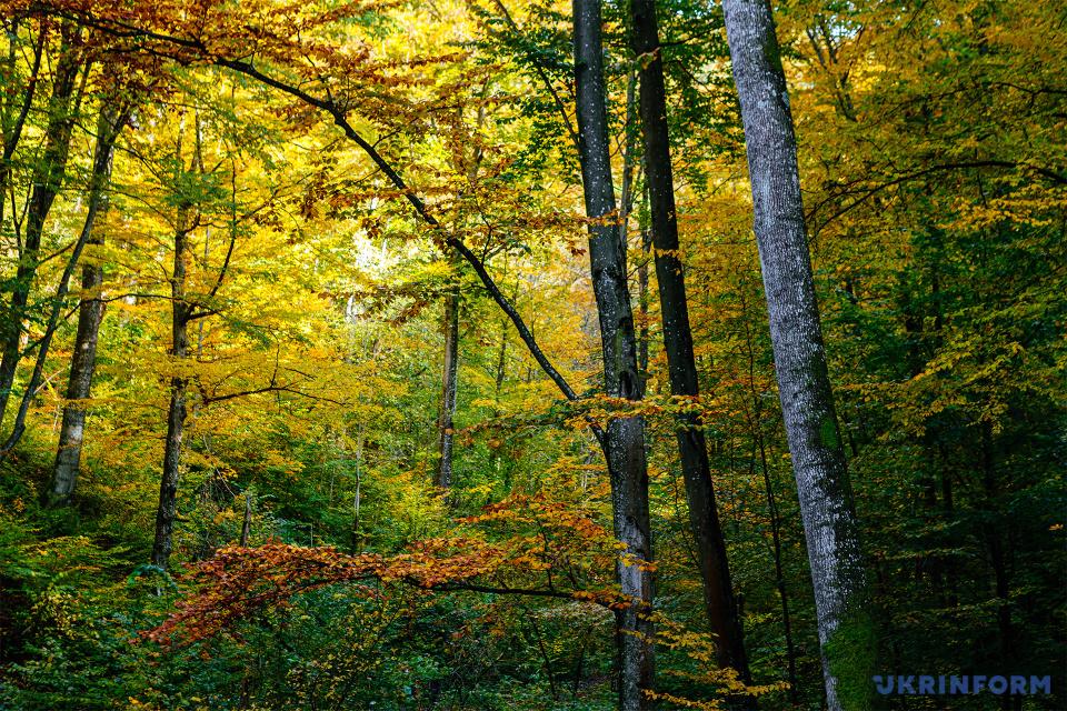 Осінній ліс на Закарпатті / Фото:  Сергій Гудак. Укрінформ
