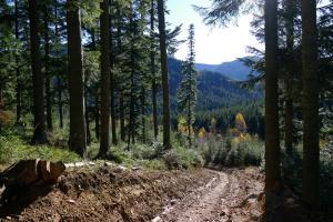 Британія втричі збільшить посадку дерев для боротьби зі зміною клімату