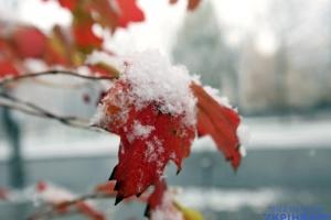 В Україні очікуються дощі з морозами та +9° з туманом