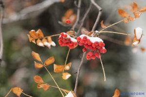 Зима будет «добавлять» каждый день по несколько градусов мороза, на дорогах - гололед