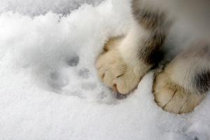 Часть Украины засыплет снегом, на Закарпатье - до 13 ° мороза