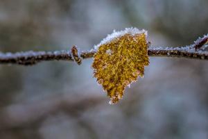 Морозні Карпати та Київ у тумані: як прощається осінь