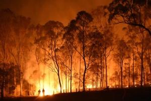 Лісові пожежі знищили понад 40% острова зі списку ЮНЕСКО