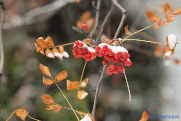 Зима «додаватиме» щодня кілька градусів морозу, на дорогах - ожеледиця