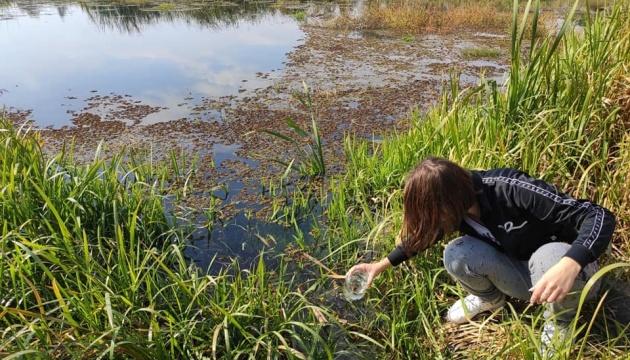 У річці Тетерів під Житомиром виявили тропічну ряску