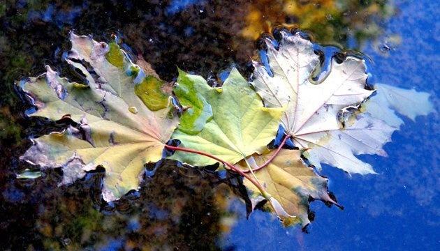 6 ноября: народный календарь и астровестник