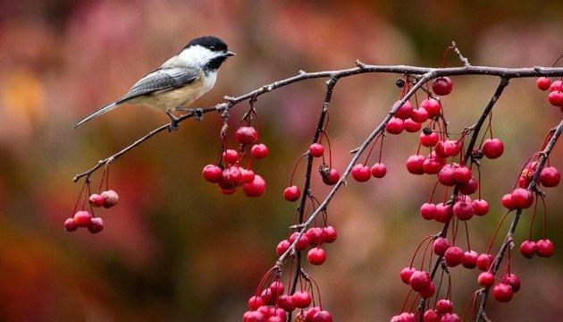 9 ноября: народный календарь и астровисник