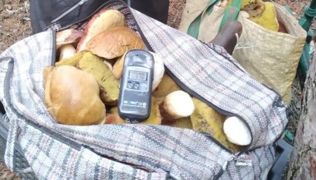 Із Чорнобильської зони намагалися вивезти 60 кілограмів радіаційних грибів