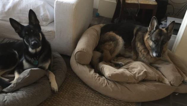 Байдены планируют перевезти своих собак в Белый дом