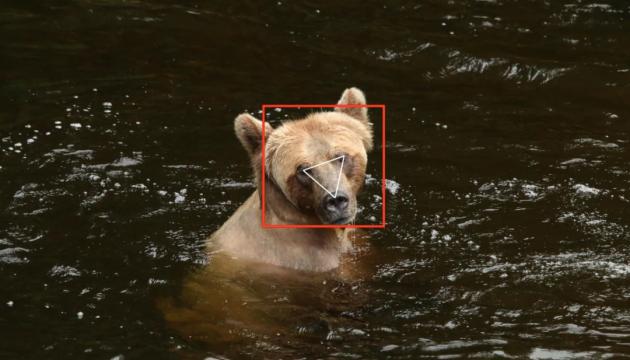 В Канаде использовали технологию распознавания лиц для отслеживания медведей гризли