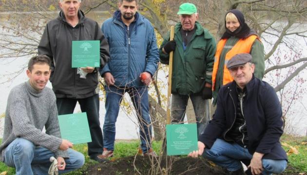 На Алеї українських діаспор висадили нові дерева від українських громад закордону