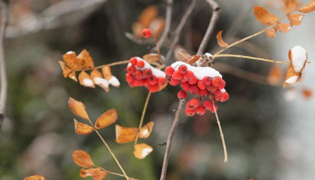 Мокрый снег, туман и до + 7°: чем встречает последняя неделя осени