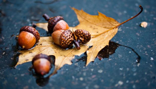 23 ноября: народный календарь и астровисник