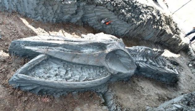 У Таїланді знайшли скелет кита віком до п'яти тисяч років