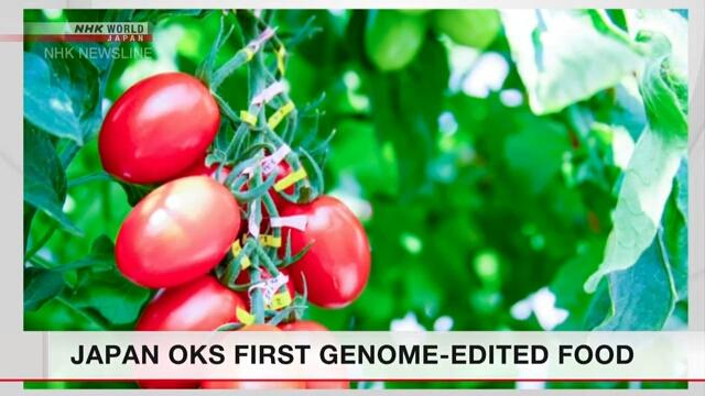 Япония одобрила продажу первого продукта с модифицированным геномом