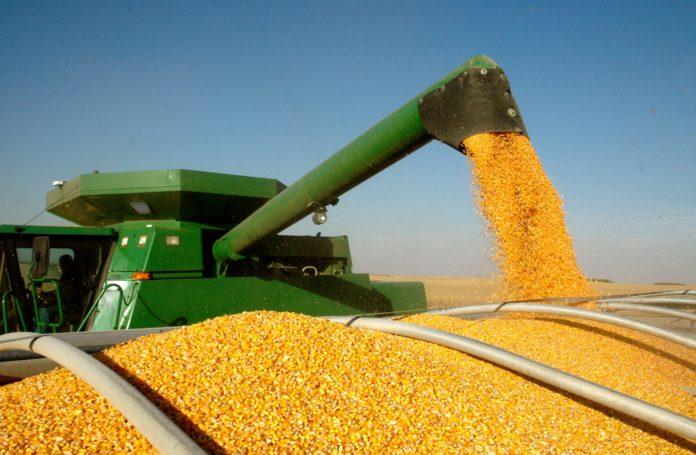 Минулого року Україна увійшла до трійки світових експортерів кукурудзи