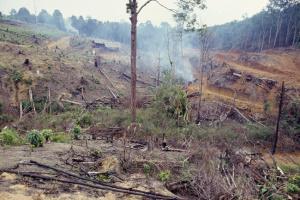 Вирубка лісів Амазонки досягла найвищого рівня з 2008 року
