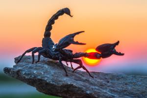 Злостивість і доброчесність скорпіона