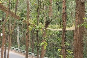 В Індії побудували міст для безпечного пересування тварин через дорогу
