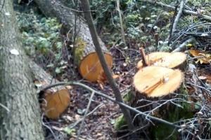 На Житомирщине экологи обнаружили незаконную вырубку деревьев на свыше 1,3 миллиона