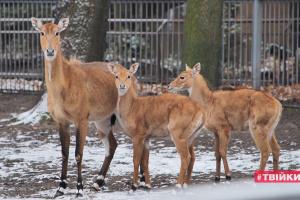 Как зимуют звери в киевском зоопарке