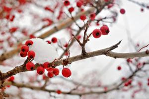 У Саду світового українства розколядою завершили різдвяні свята