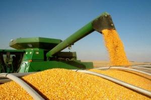 Предельный объем экспорта кукурузы определили на уровне 24 миллионов тонн - Минэкономики