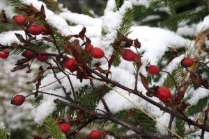 В Україну повернеться сніг, місцями намете до 20 сантиметрів