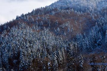"""Zelensky crea el Parque Natural Nacional """"Korolivski Beskydy"""""""