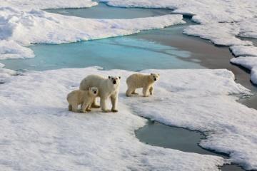 Aujourd'hui marque la Journée mondiale du climat