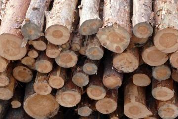 La UE declara su victoria en la disputa por la prohibición de las exportaciones de madera con Ucrania
