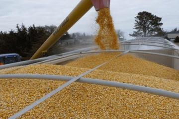 ACU: Ucrania aumenta las exportaciones de cereales a China