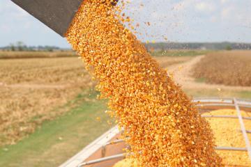 Verkauf von Getreide und Ölsaaten um fast ein Drittel gefallen – Statistikdienst
