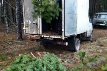 Diebe wollten fast 900 Weihnachtsbäume klauen