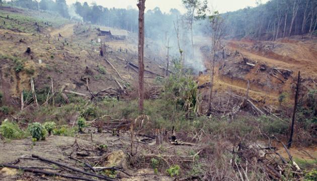 Вырубка лесов Амазонки достигла наивысшего уровня с 2008 года