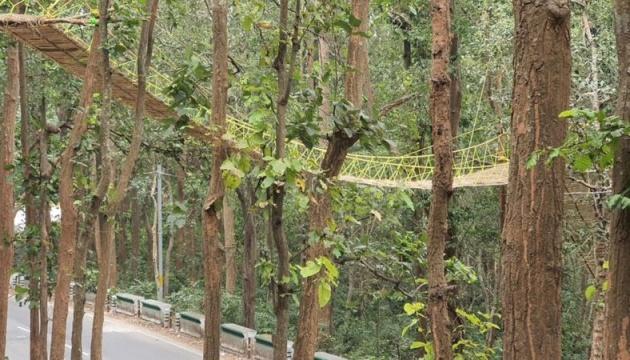 В Индии построили мост для безопасного передвижения животных через дорогу